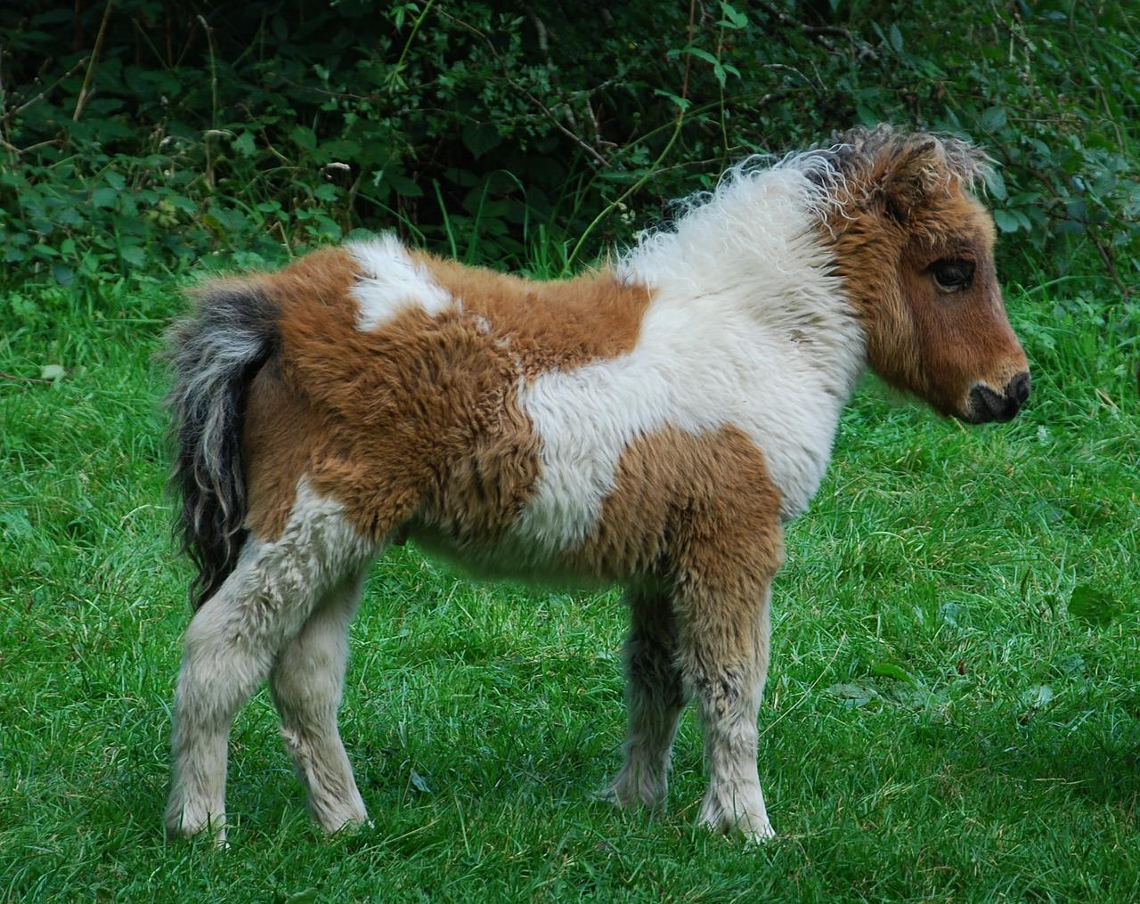 pony-591969_1280